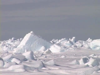 Sea Ice photo from Elder's knowledge video