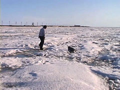 photo of a seal and person on ice